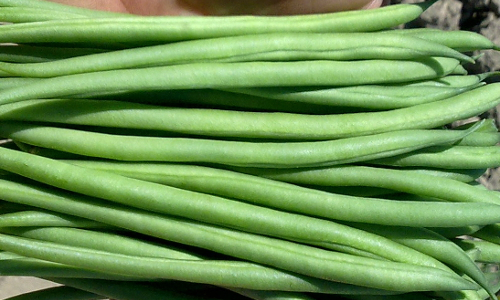 Holland-Select breeding vegetables